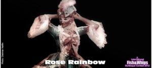 Rose Rainbow - Marie Antoinette